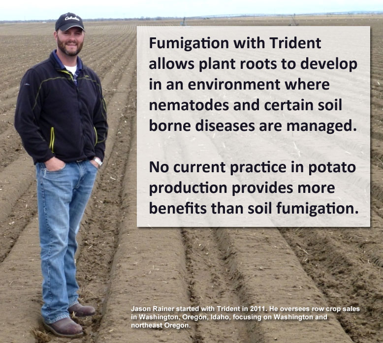 Fumigation with Trident allows plant roots to develop in an environment where nematodes and certain soil borne diseases are managed.    No current practice in potato production provides more benefits than soil fumigation.